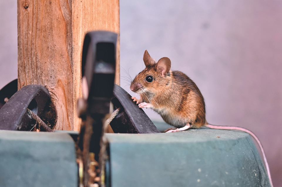 Myši jsou problém